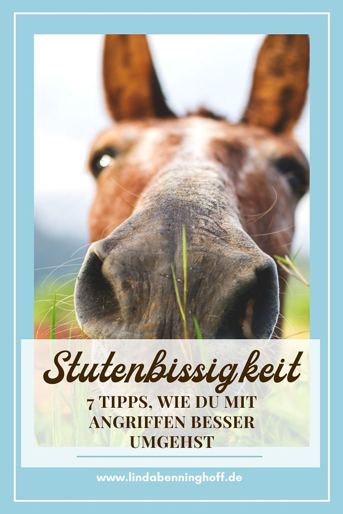 Stutenbissigkeit Pferd Pinterest