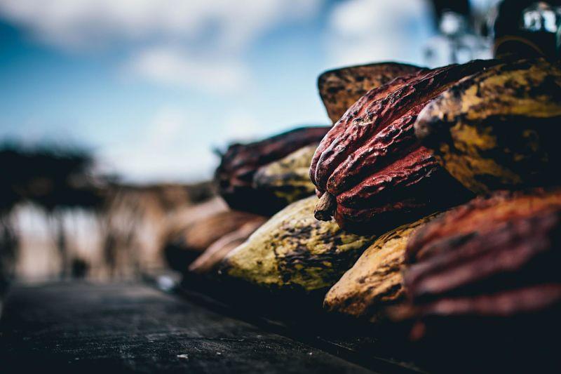Kakaofrüchte gestapelt. Sie werden für die Kakaozeremonie verarbeitet